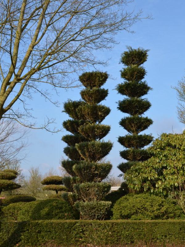 Formgehölz im Park der Gärten in Bad Zwischenahn
