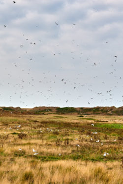 10. Zugvogeltage im Nationalpark Wattenmeer       vom                  13. – 21.10.2018